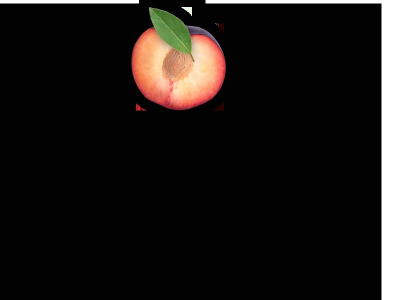 plum-object-2-2