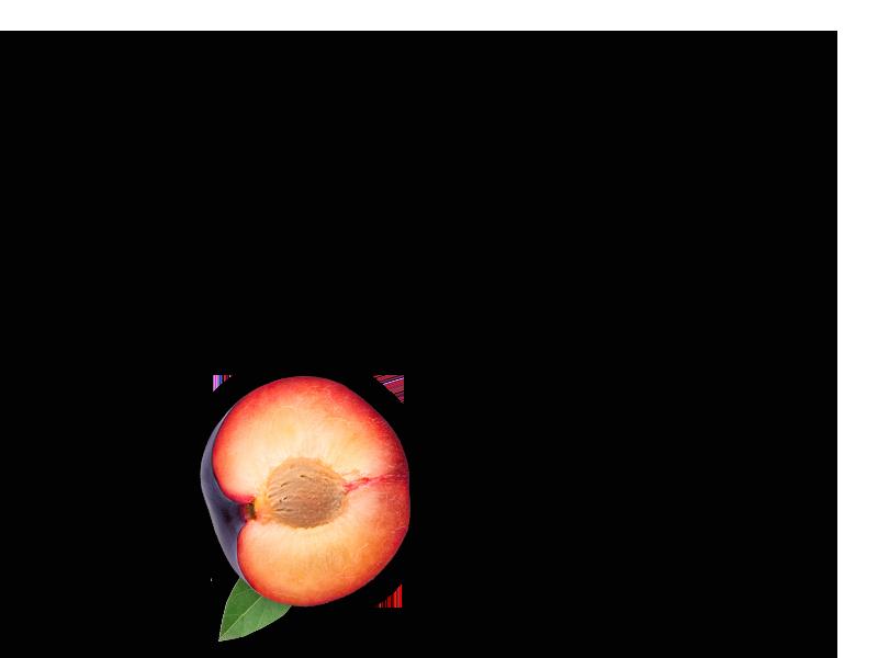 plum-object-3-2