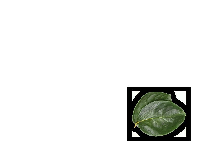 persimmon-object-2-en