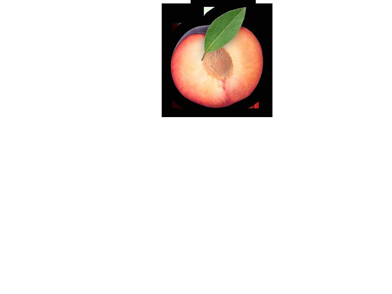 plum-object-2-2-en