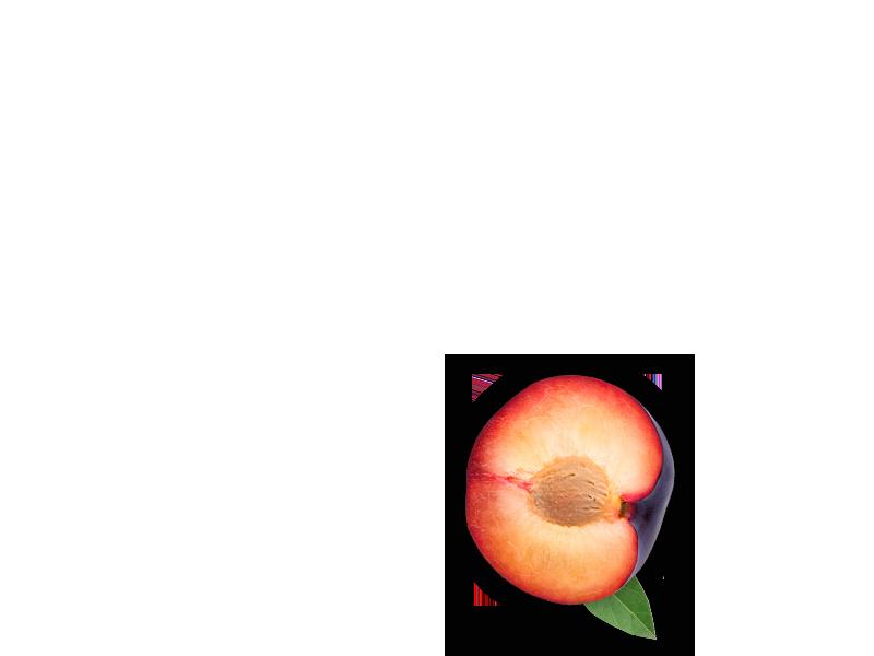 plum-object-3-2-en